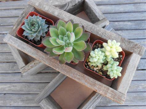 rustic centerpiece succulent planter by succulents galore