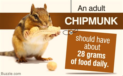 7 Things To Consider When Picking Pet Food by Things You Should Consider Before Choosing Chipmunks As Pets