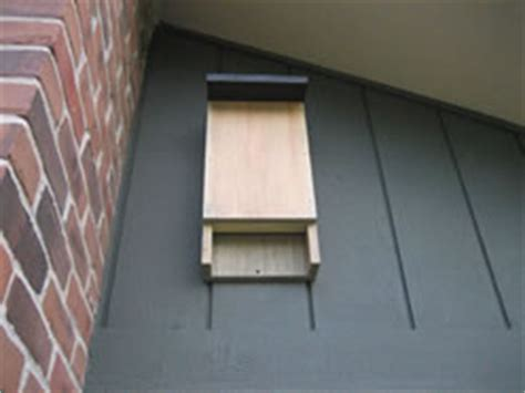 where to put bat house how and where to hang a bat house to eliminate bugs matt and shari