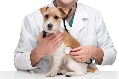imagenes de medicas veterinarias m 233 dicos veterinarios tendr 225 n acceso a medicamentos