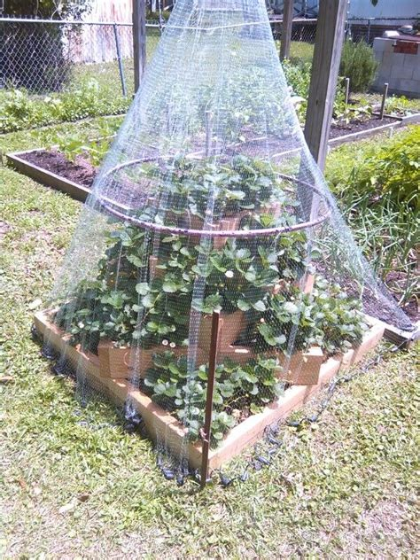 How To Make A Strawberry Planter Out Of A Pallet by Strawberry Planter With Cast Net To Keep Birds Out