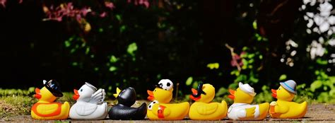 bathtub rubber ducks free photo rubber ducks bath ducks free image on pixabay 1408285