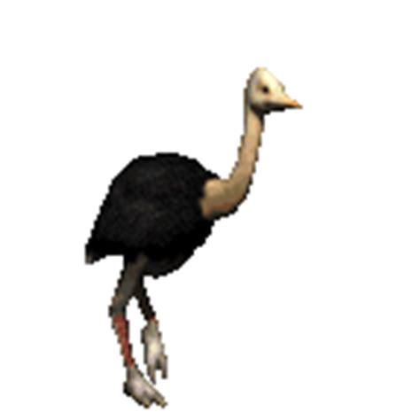 aqu las ms hermosas imgenes de gifs de flores con frases avestruces im 225 genes animadas gifs y animaciones 161 100
