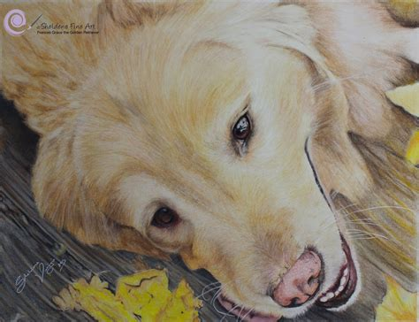 drawing of a golden retriever timelapse drawing of frances grace the golden retriever