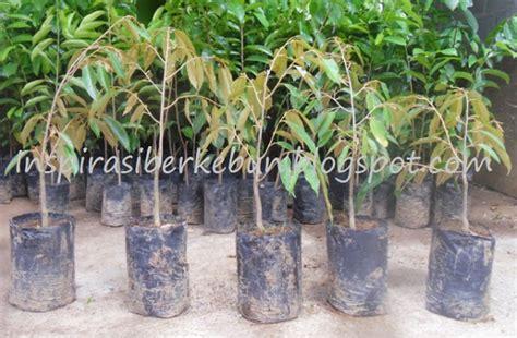 Furadan Untuk Rayap cara menyemai dan memperbanyak bibit durian dari biji