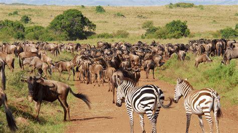 Find In Kenya Image Gallery Kenya Animals Plants