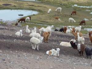 imagenes de animales uñas gran intercambio americano la gu 237 a de geograf 237 a