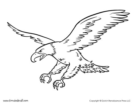 bald eagle coloring page tim van de vall