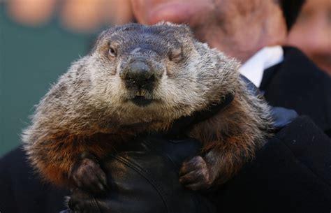 groundhog day and groundhog day toronto