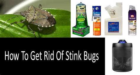 get rid of bugs in house how to get rid of bugs in house plants 28 images how to get rid of bed bugs at