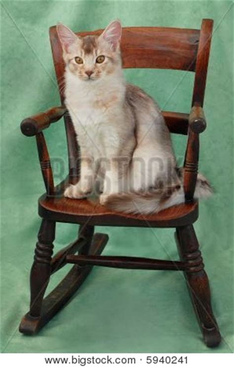 Cat Sitting In Chair by Cat Sitting On Rocking Chair Stock Photo Stock Images