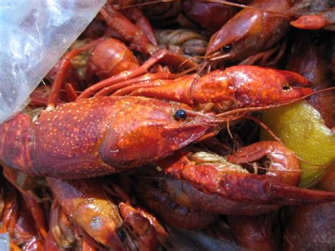 Sleeping With The Crawfish 196 reasons to just go in 2014 part 3 bootsnall