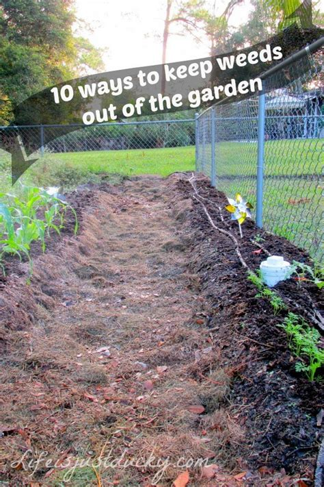 how to keep weeds out of flower beds 35 creative garden hacks tips that every gardener