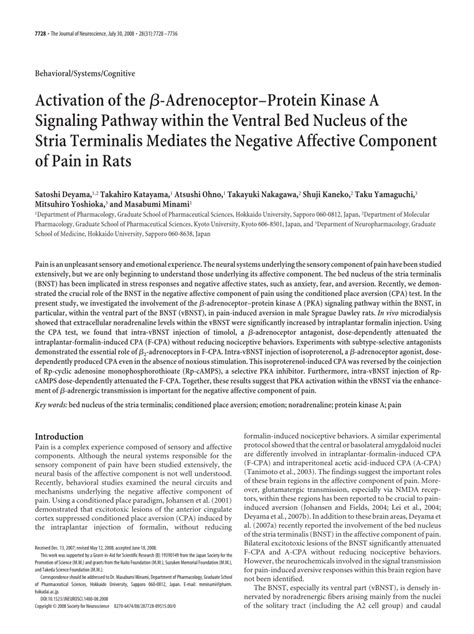 bed nucleus of the stria terminalis activation of the adrenoceptor protein kinase a signaling pathway within the ventral
