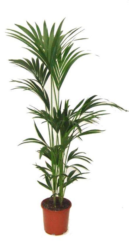 Impressionnant Plantes Depolluantes Pour La Maison #7: Dd825c378d870c0816e901d8a1ba9aab.jpg
