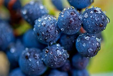 imagenes de uva malbec agrosentidos