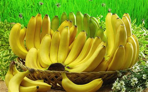1 Sisir Pisang Ambon khasiat dan manfaat buah pisang untuk maag