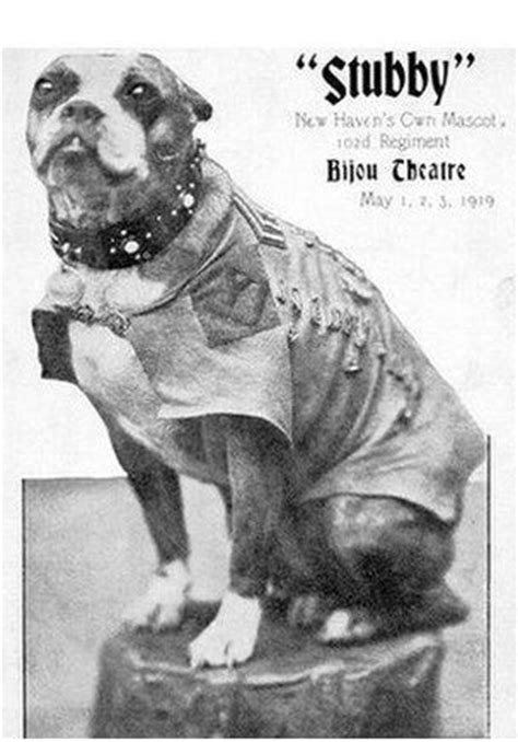 Sergeant Stubby Pitbull Best 25 Sergeant Stubby Ideas On Pitbull Wiki Who Fought In Ww1 And War Dogs