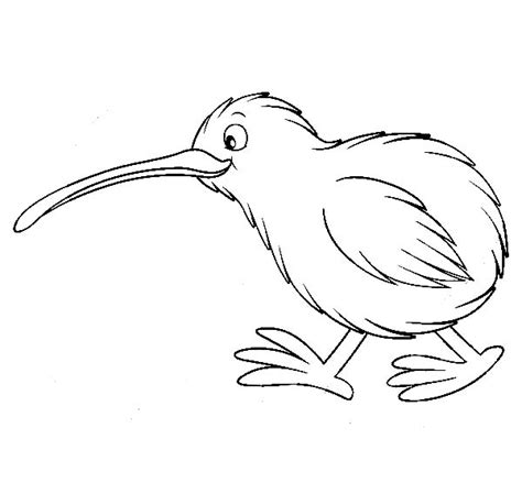 coloring page kiwi bird kiwi bird cute coloring pages pictures litle pups