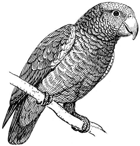 imagenes en blanco de animales dibujos de plumas para colorear imagui