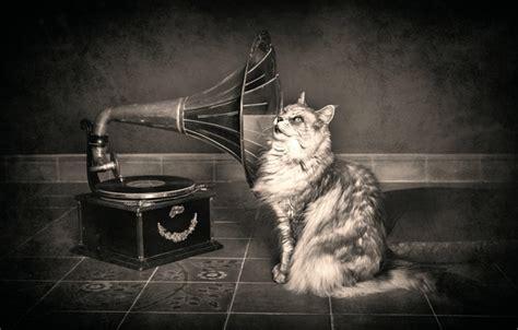 wallpaper cat gramophone hearing images  desktop