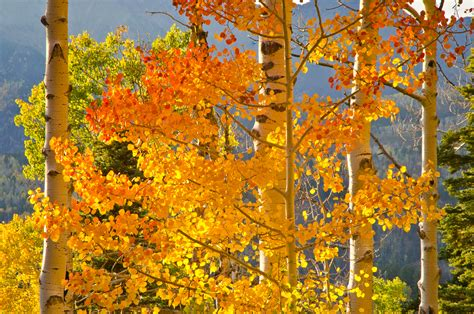 Finder Colorado Colorado Fall Foliage Report Kit
