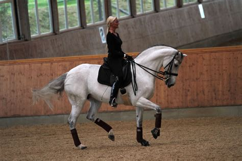 Donna Silver donna silver dressage jumping horses hof