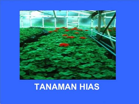 media  jenis tanaman hidroponik