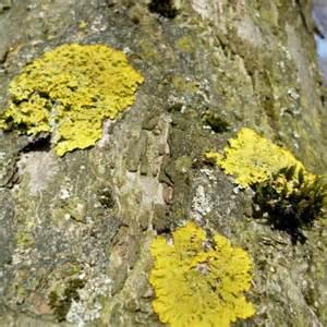 moos und algen terrasse entfernen flechten moose und algen liebe deinen garten