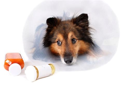 the counter meds for dogs are the counter medications safe for my petmd