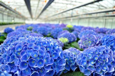 mercato dei fiori terlizzi agricola de palma s s mercato dei fiori terlizzi