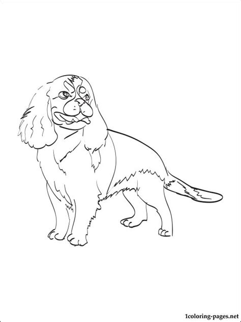 coloring pages of cavalier king charles spaniels cavalier king charles spaniel coloring page coloring pages