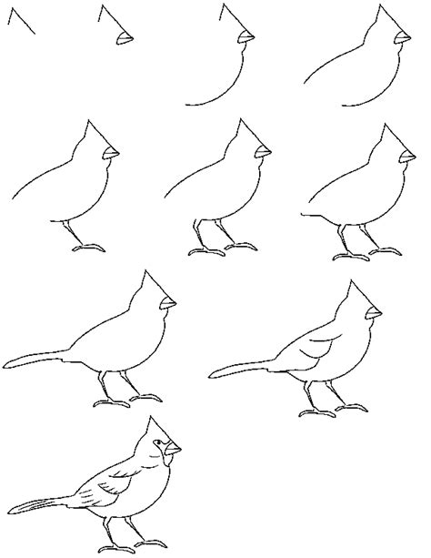 How To Draw Bird Learn Pencil Drawing Pencil Drawing Basics For