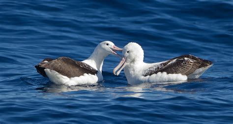 food like smell on plastic may lure seabirds to eat it