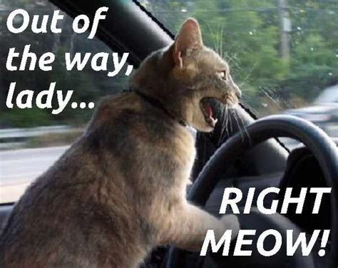 Qstart Reminds You Where Youre Driving Big Picture Wise by Driving Cat Pun Meme Car Funnies Cat Puns