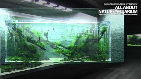 How To Make An Aquascape The World S Largest Nature Aquarium Takashi Amano Youtube