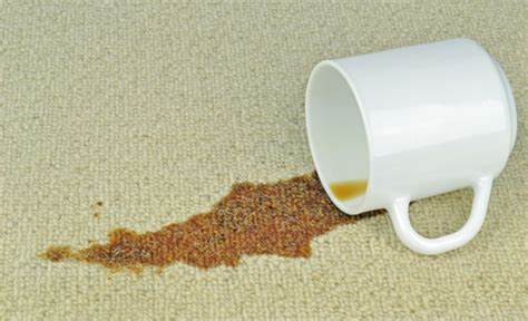 spilled coffee on rug steps to remove coffee stains from your carpet