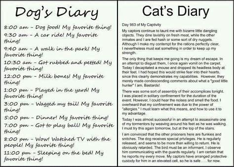 cat vs diary vs cat diary imghumour