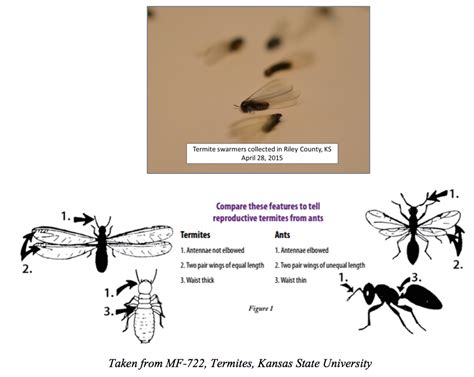 uncategorized extension entomology identification extension entomology