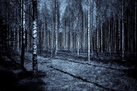forest night dark  photo  pixabay