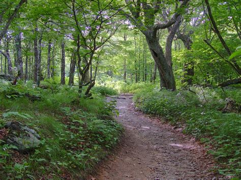panoramio photo of trail near craggy gardens