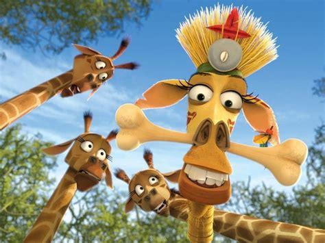 imagenes de jirafas de madagascar jirafa de madagascar melman im 225 genes y fotos