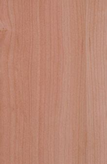 Bosch Fleece Best For Finish Coarse Light Brown Han Berkualitas cherry quartered veneer at edgemate of roaring pa