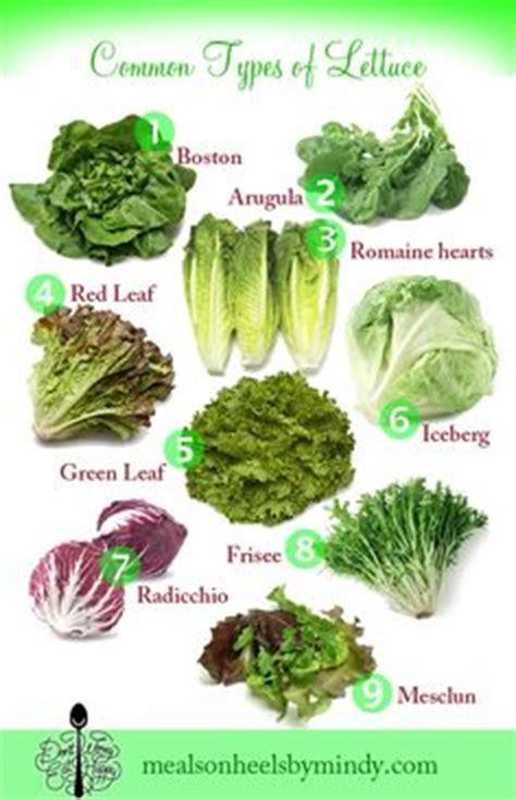 types of greens chart different types of lettuce and