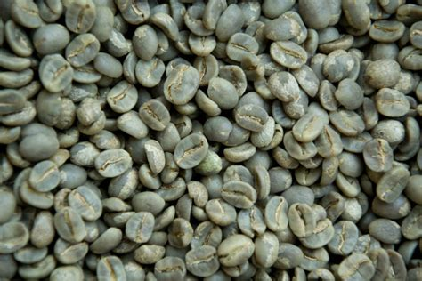One Bean Coffee Specialty Arabica Toraja Perindingan coffee green beans grade aa arabica gourmet 1550 mtrs grown buy coffee beans arabica nepal