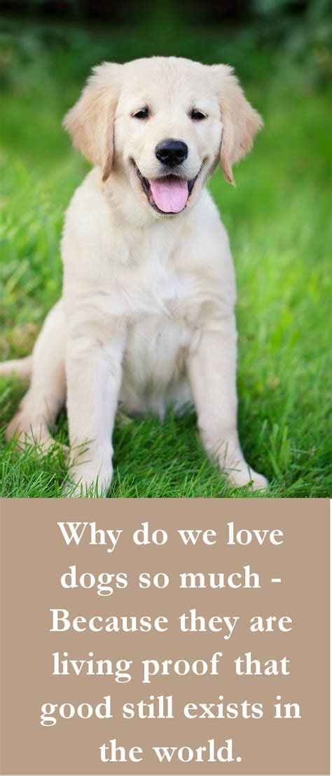 how much are dogs 27 beautiful quotes some touching some poignant some