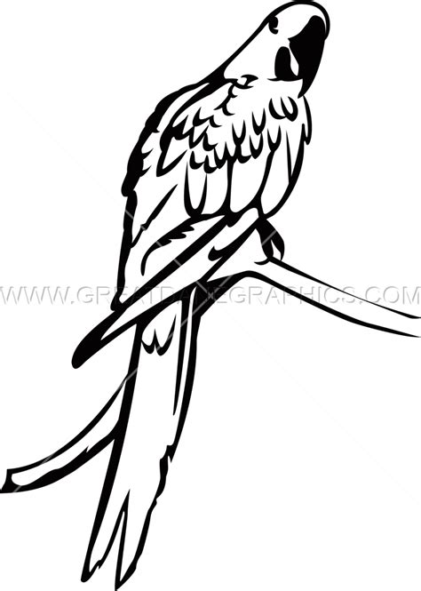 macaw coloring page blue and gold macaw coloring pages