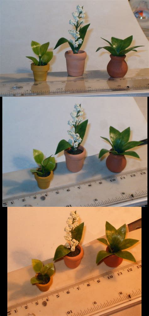 miniature indoor plants miniature house plants by bloodypopcorn on deviantart