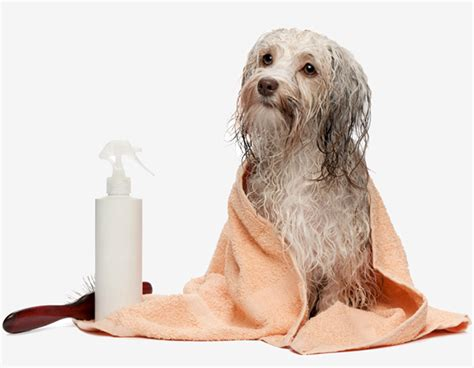 dog groomers that come to house woof wash mobile dog grooming vancouver west vancouver north vancouver dog grooming