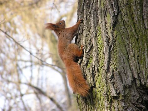 let me see you do the squirrel free stock photos rgbstock free stock images